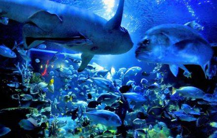 Chiang-Mai-Zoo-Aquarium123