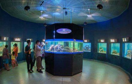 Marine-Science-Museum-Burapa-university